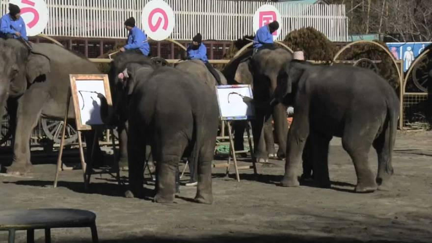 Elephants show off their calligraphy skills at a zoo near
