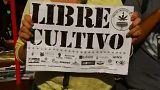 """""""Cultivo de canábis devia ser legalizado na Cidade do México"""""""