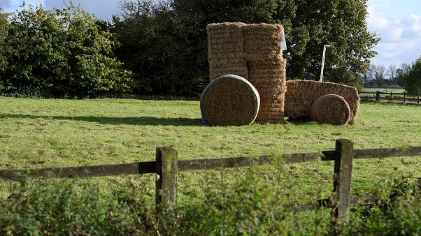 UK plans farm subsidy overhaul in push for 'green' Brexit