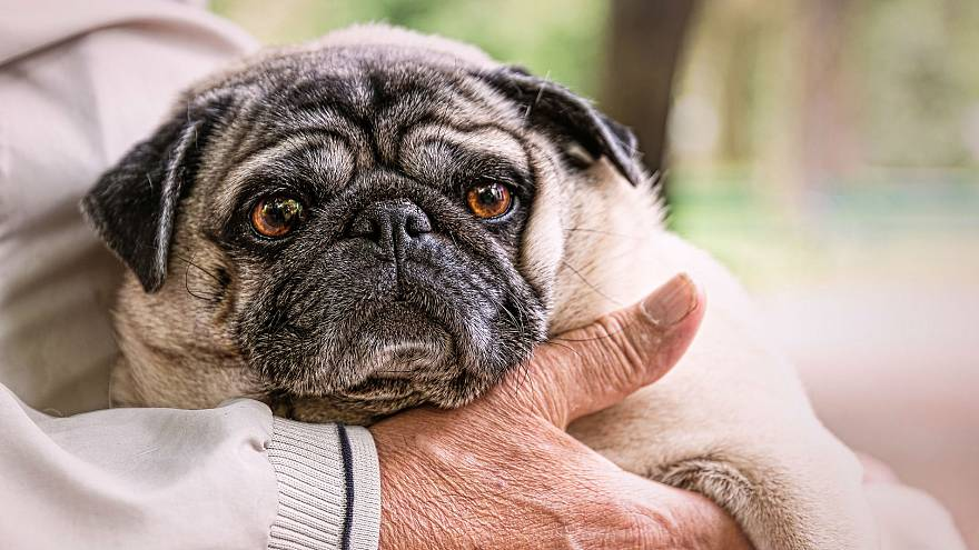 Belgium considers law to allow owners to be buried with their pets
