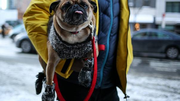 US East Coast shivers in New Year Big Freeze