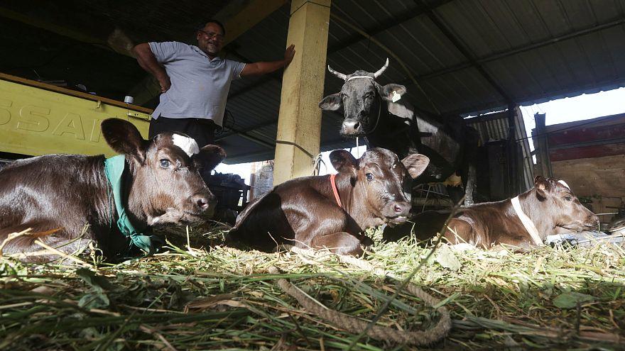 لماذا تعد  أسعار اللحوم في سويسرا الأغلى عالميا؟