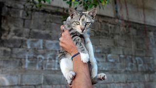 Власти Бельгии решили кастрировать всех котов