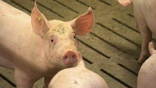 Alemanha toma precauções contra gripe suína