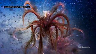 Тайна и судьба Мирового океана
