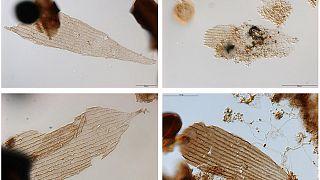 Πεταλούδες 200 εκατομμυρίων ετών!