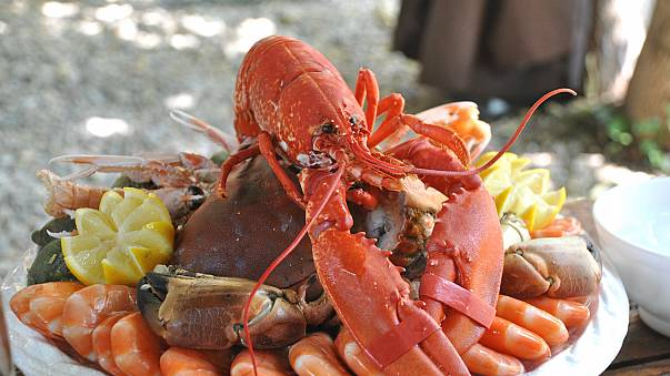 Swiss law bans boiling lobsters alive