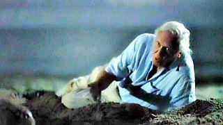 Töretlen Sir David Attenborough népszerűsége