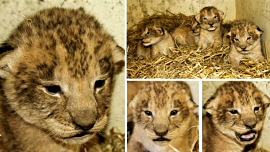 Three of the Zoo's cubs who all were put to death in 2012