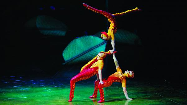 A bug's life: The Cirque du Soleil bring their latest show 'OVO' featuring a carnival of acrobatic insects, to London's Royal Albert Hall