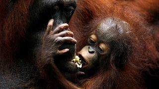 Singapur'da hayvanat bahçesinin sevimli yavruları