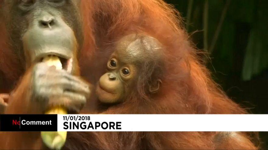 Детёныши зоопарка в Сингапуре