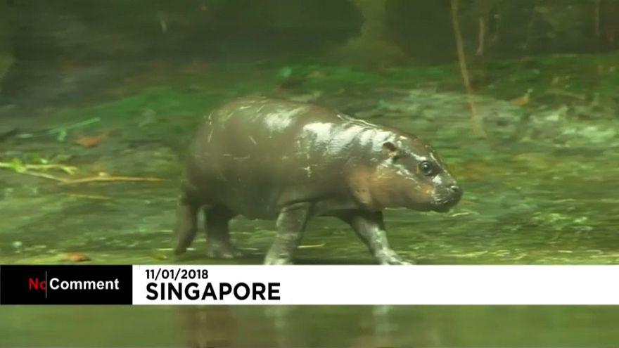 Singapour au secours des espèces en danger