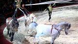 Budapester Festival feiert 250 Jahre Zirkus
