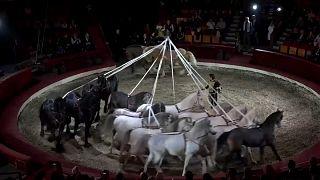Budapeşte Uluslararası Sirk Festivali başladı