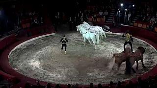 Népszerű a budapesti cirkuszfesztivál