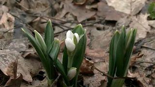 Frühling in der Ukraine