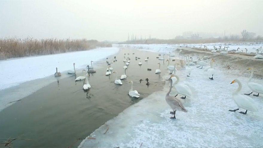 Parque no Norte da China ajuda aves migratórias a sobreviver no gelo