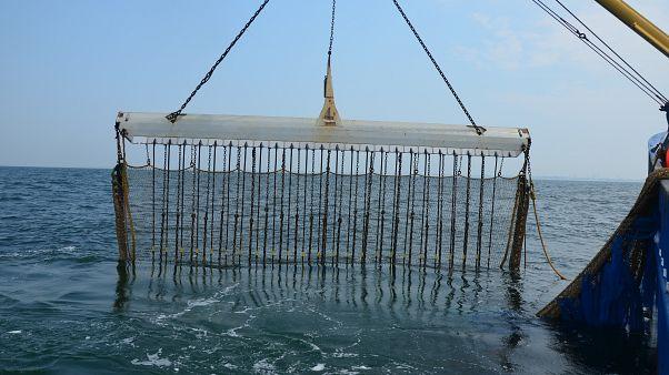 La pesca eléctrica de arrastre ¿Innovación o crimen ecológico?