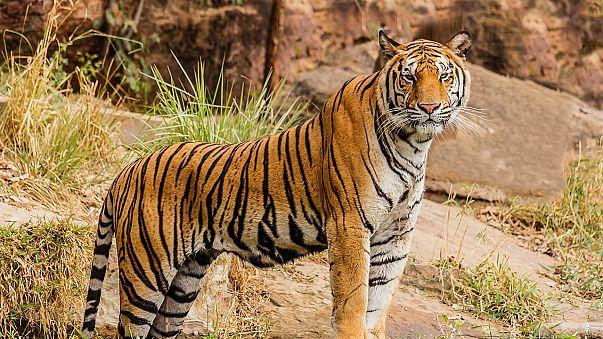 Tierschützer retten Zootiere aus Syrien