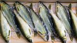 EU Parliament votes to ban electric pulse fishing