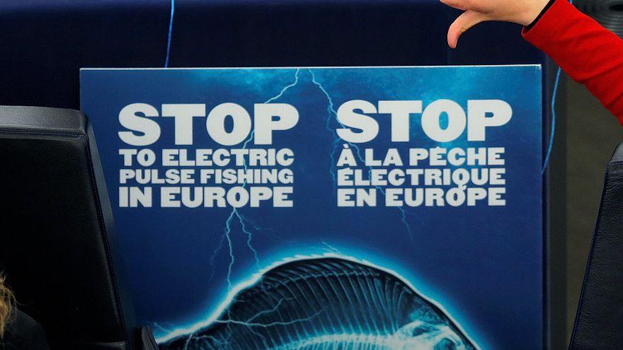Κατά της αλιείας με χρήση ηλεκτρικών παλμών το Ευρωπαϊκό Κοινοβούλιο