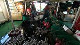 Strasburgo dice no alla pesca elettrica, le reazioni della Ong Bloom