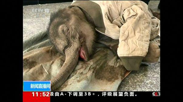 Bebek fili kurtarma operasyonu
