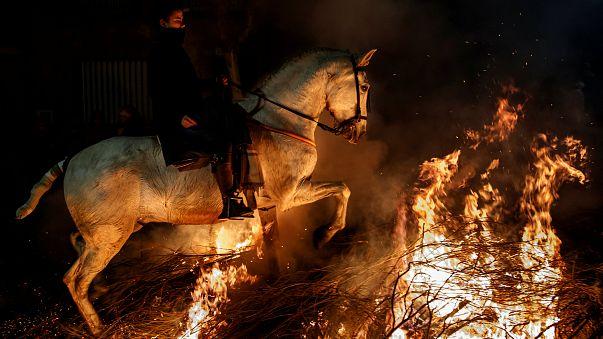 Las Luminarias, un festival dénoncé par les défenseurs des animaux