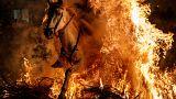 """""""تطهير"""" الخيول بالقفز عبر النار في إسبانيا"""