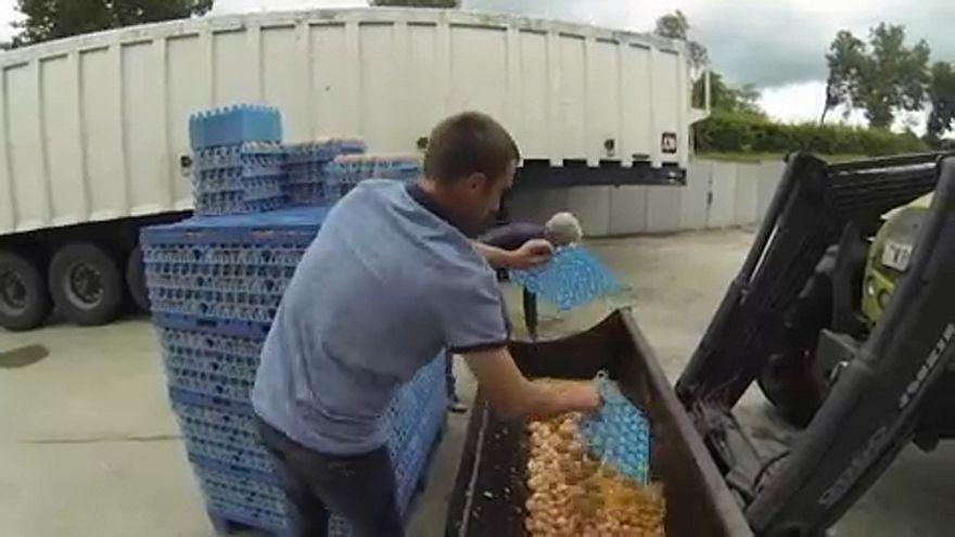 Ovos contaminados