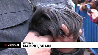 Pets in Madrid don their best outfits to be blessed for Saint Anthony's day