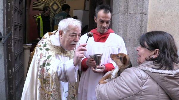 Mascotas y agua bendita en el día de San Antón