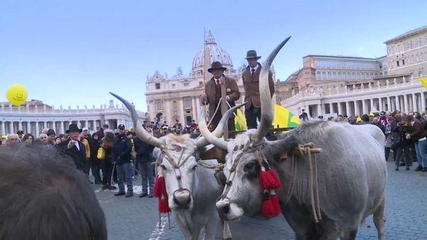 La benedizione degli animali a Piazza San Pietro