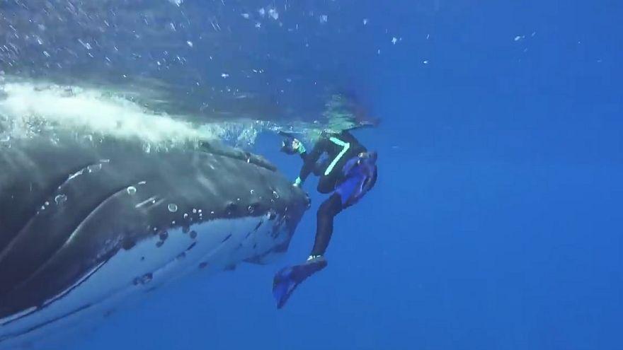 حوت ينقذ عالمة أحياء من سمك القرش