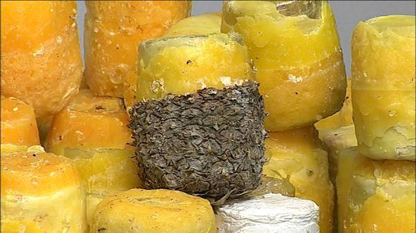745 kilos de cocaïne dans des ananas!