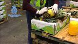 I coni di cocaina ricoperti di cera erano inseriti negli ananas