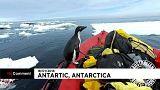Vicceskedvű pingvin a Déli-sarkon