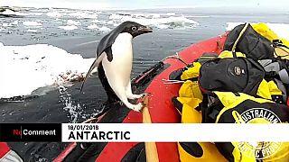 Un pinguno salta spontaneamente a bordo della barca dei ricercatori in Antartide