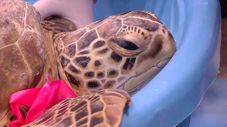 Texas: Kälte bedroht Meeresschildkröten