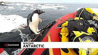 Pinguim surpreende grupo de cientistas na Antártida