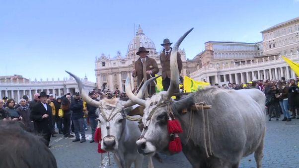 Animales en el Vaticano por el día de San Antón