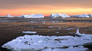 بالفيديو: بطريق فضولي يفاجئ علماء على متن قاربهم في انتاركتيكا