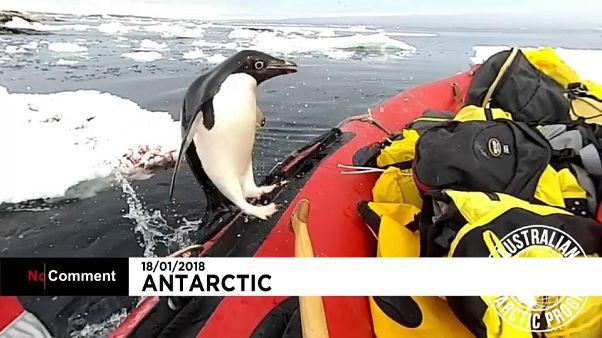 Da springt ein kleiner Pinguin an Bord
