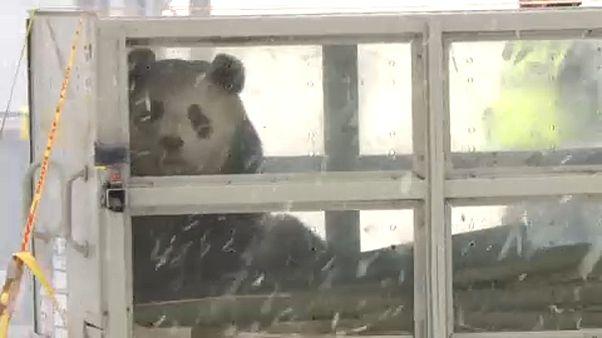 Panda pár érkezett Finnországba