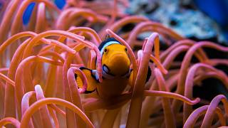 La Grande Barrière de corail comme vous ne l'avez jamais vue