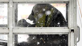 Chinesische Pandas am Flughafen von Helsinki