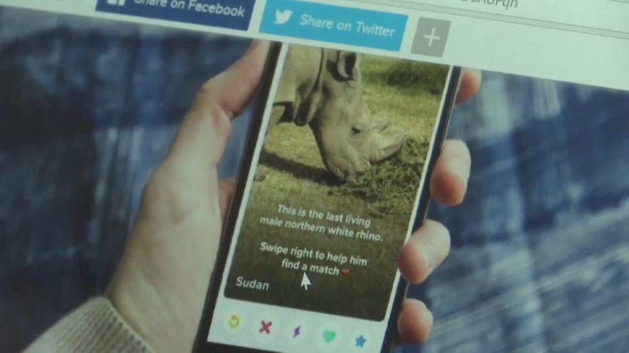 """Quénia cria """"Tinder"""" para último rinoceronte macho da espécie"""