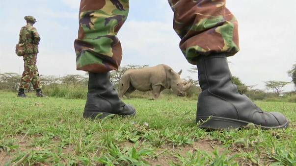 Tinder-Kampagne soll Nashorn retten
