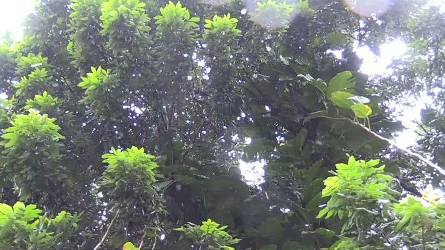 Tropensturm zieht knapp an La Réunion vorbei